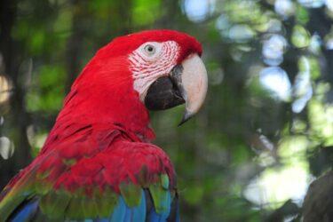 Parque das Aves espera receber 6 mil turistas no feriadão do Dia de Finados