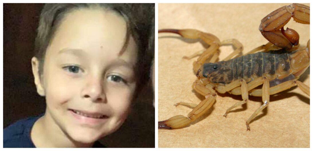 Menino de 5 anos morre após ser picado por escorpião amarelo no norte do Paraná