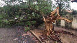 Temporal: Rajadas de vento passam dos  56 km/h e derrubam mais de 40 árvores em Maringá