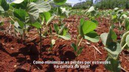 Como amenizar o estresse hídrico na lavoura | DICAS NA AGRICULTURA