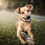 Startup curitibana lança app que facilita contato entre donos de pets e clínicas