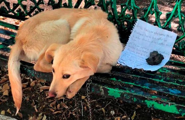 Cão é encontrado em banco de parque com bilhete de partir o coração