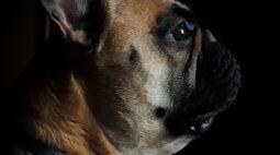 Dois cachorros testam positivo para coronavírus em Curitiba