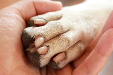 Cuidados ao cortar as unhas dos animais