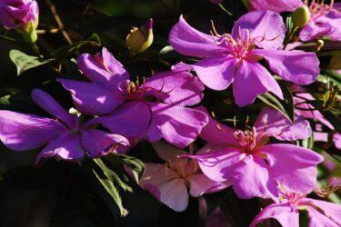 Florada de árvores nativas dita calendário da natureza e sugere roteiro das flores