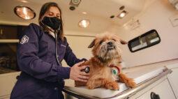 Primeiro serviço veterinário de cuidado domiciliar do Brasil é inaugurado em Curitiba