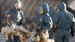 Com rápido avanço, gripe aviária coloca Europa em alerta