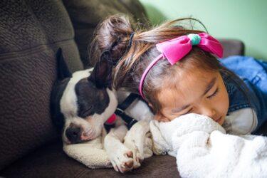 Alergia: convívio com animais de estimação é possível