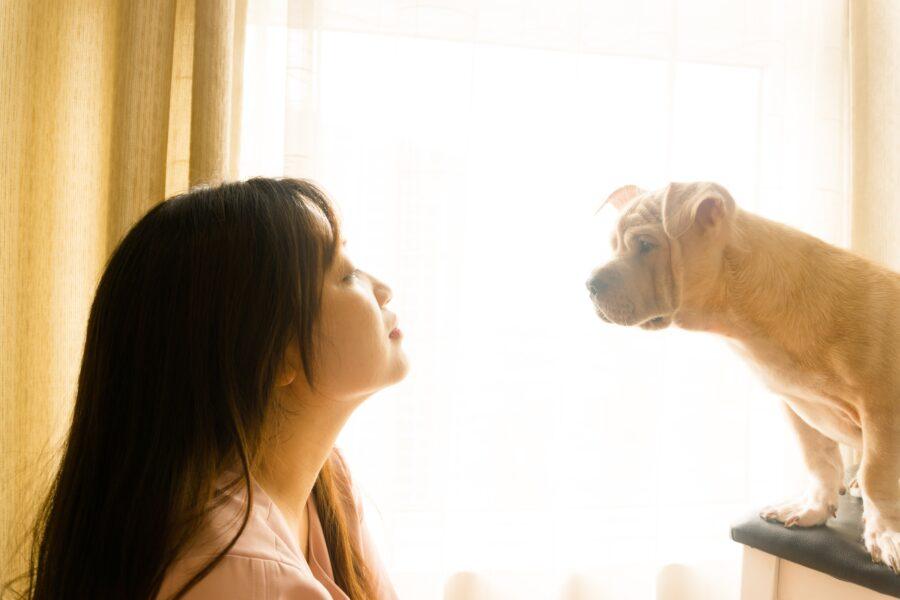 Como é possível se comunicar com os animais?