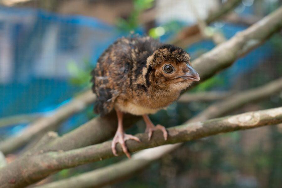 Parque das Aves é a única instituição no mundo focada em conservação de Aves da Mata Atlântica