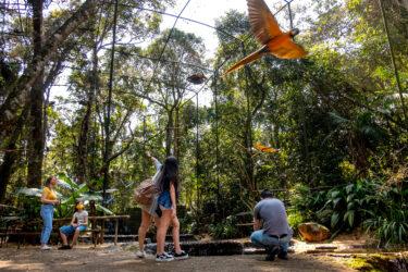 Municípios vizinhos do Parque Nacional do Iguaçu têm tarifa especial no Parque das Aves