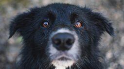 Como enxergam os cães?