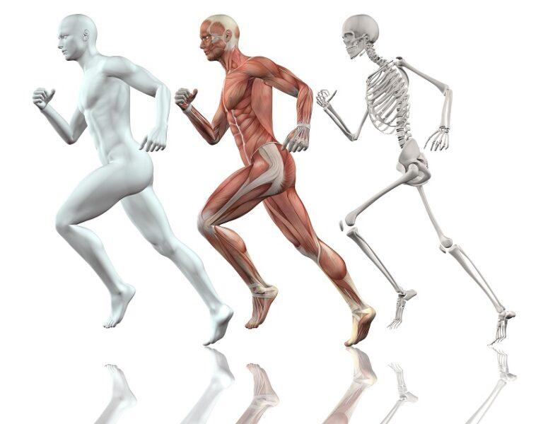 Curso online ensina fisiologia e treinamento de corredores para atletas e profissionais de educação física