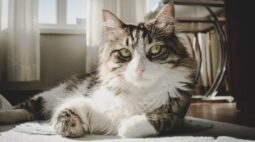 E-book esclarece regras no convívio dos pets nos condomínios