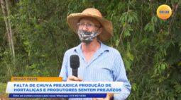 Falta de chuva prejudica produção de hortaliças e produtores sentem prejuízo