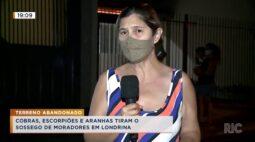Cobras, escorpiões e aranhas tiram o sossego de moradores em Londrina