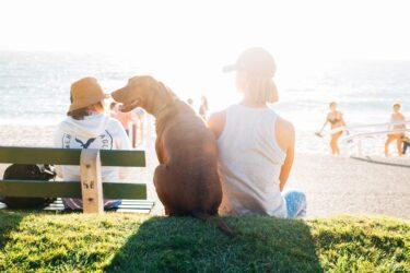 Brasileiros querem viagens domésticas, baratas e com animais de estimação