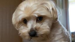 Cachorro sozinho em casa: dicas para o pet ficar bem