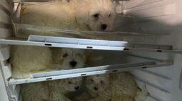 Filhotes de cachorro mantidos em geladeira são resgatados pela polícia