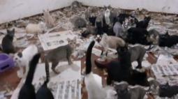 Polícia resgata 164 gatos em situação de maus-tratos no Paraná