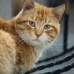 Aplicativo desvenda linguagem dos gatos e traduz miados