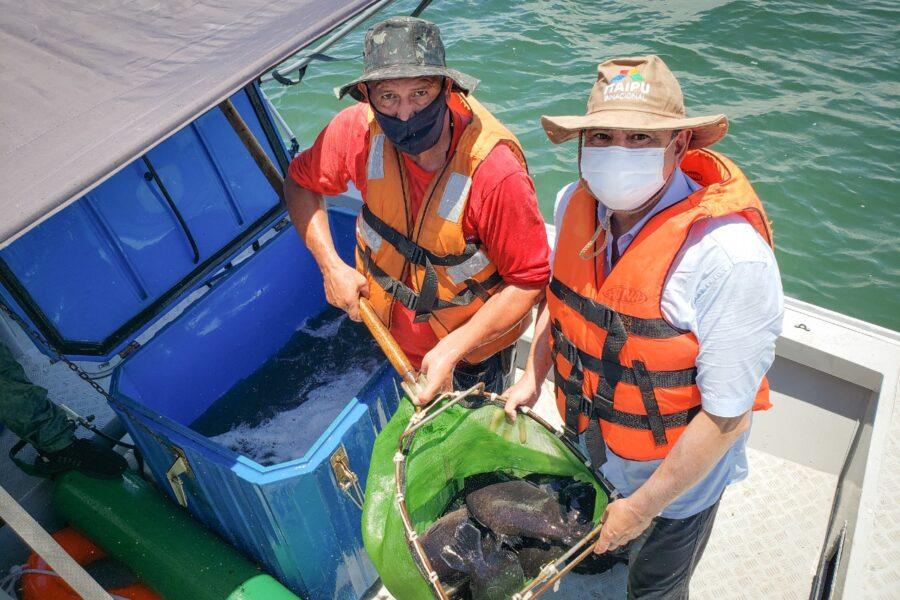 Itaipu faz soltura recorde de peixes para pesquisa sobre comportamento das espécies migratórias
