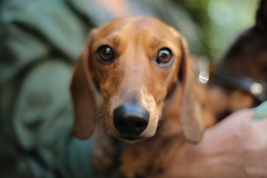 Veja os cuidados necessários para evitar que cães e gatos peguem Covid-19