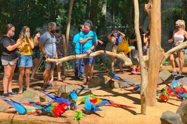 Parque das Aves faz reforma no Viveiro das Araras