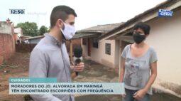 Moradores do Jd. Alvorada em Maringá têm encontrado escorpiões com frequência