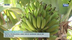 Bananas de Maringá: fruta produzida aqui deve ganhar selo de qualidade