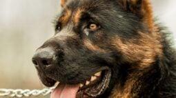 Sancionada lei que proíbe manter animais acorrentados