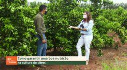 Como ter boa nutrição na cultura do citros | DICAS NA AGRICULTURA