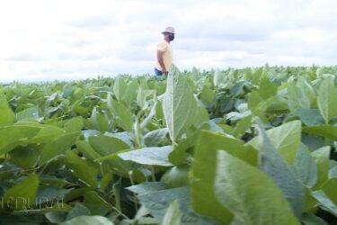 Produtores mantém otimismo para o plantio do milho safrinha