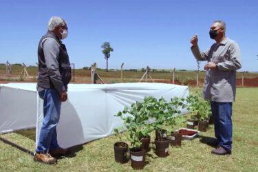 Testes em laboratório do herbicida dicamba | RALLY DE PRODUTIVIDADE