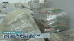 Fitoterápicos: saiba como são feitos os produtos obtidos de plantas medicinais