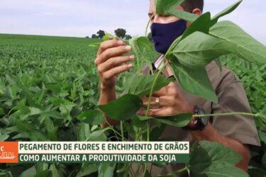 Como aumentar a produtividade da soja | DICAS NA AGRICULTURA
