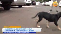 Cachorrinha de morador de rua é resgatada após prisão do tutor