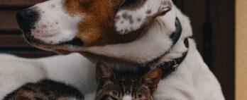 Como acostumar dois pets a viverem juntos?