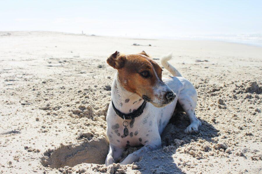 Cachorro na praia: você concorda ou não?