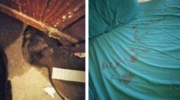 Mãe acorda com gritos de bebê sendo atacado por rato gigante e agressivo