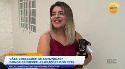 Cães conseguem se comunicar donos conhecem as reações dos pets