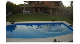 Vídeo mostra cachorra salvando 'irmã' cega que caiu em piscina