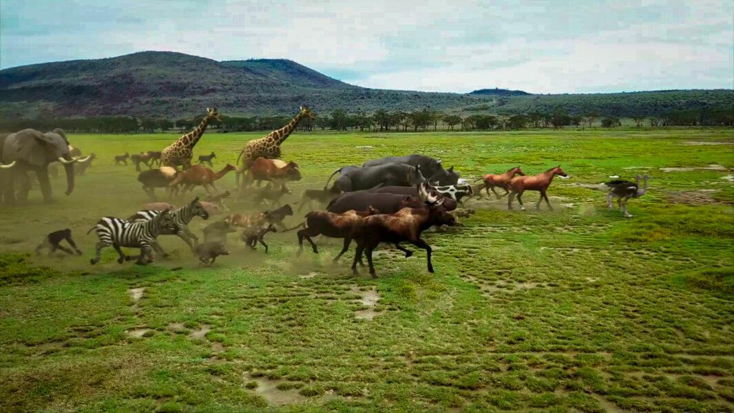 O dilúvio se aproxima e Noé se desespera com a ausência do filho