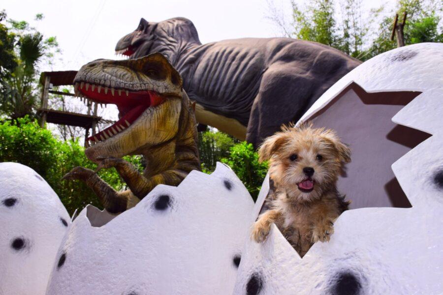Dreams Park Show cria fundo em defesa dos animais