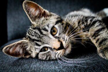 Saiba como prestar os primeiros socorros aos pets
