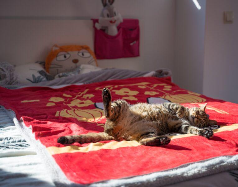 Pequenos hábitos podem prevenir a agressividade  e garantir o bem-estar do seu gato