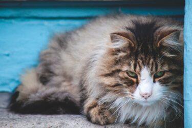 Gato vomitando espuma branca? Saiba o que fazer!