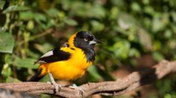 Venha fazer birdwatching no Parque das Aves