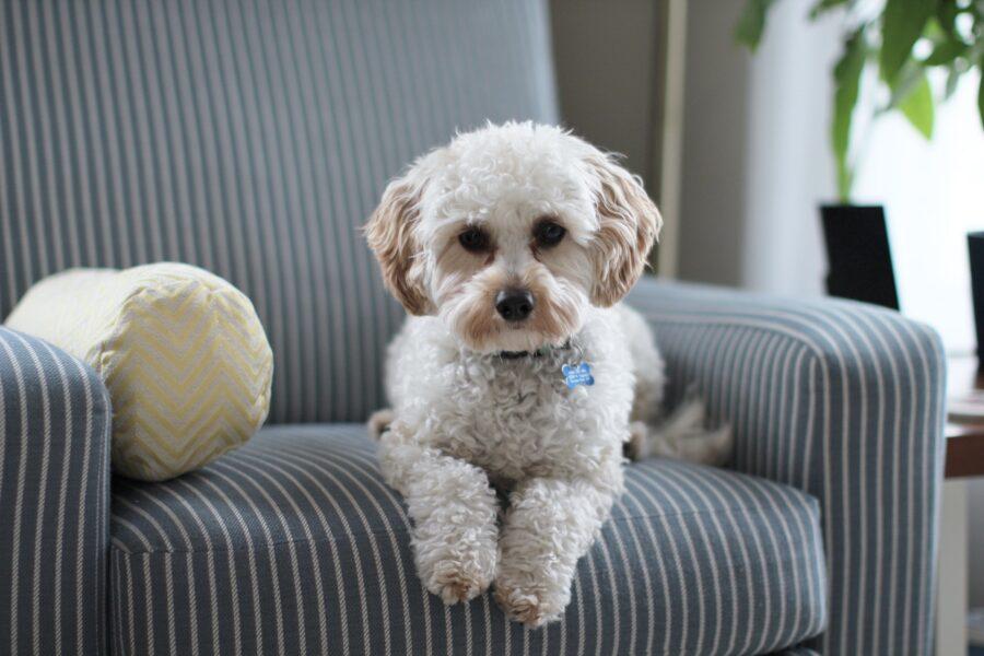 Residência com Pets: cuidados essenciais na higiene de tapetes e sofás