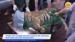Tigre Tom morre em zoológico de Curitiba, ele vivia no zoo desde 2014